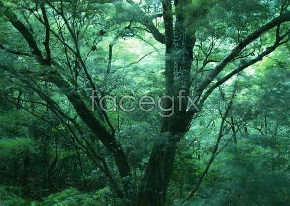 Jungle beauty of 182