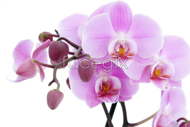 Orchid white picture material