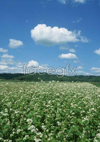 Thousand flower 623