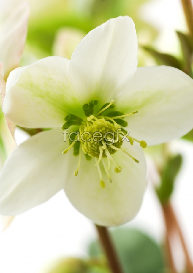 White nature flowers pictures
