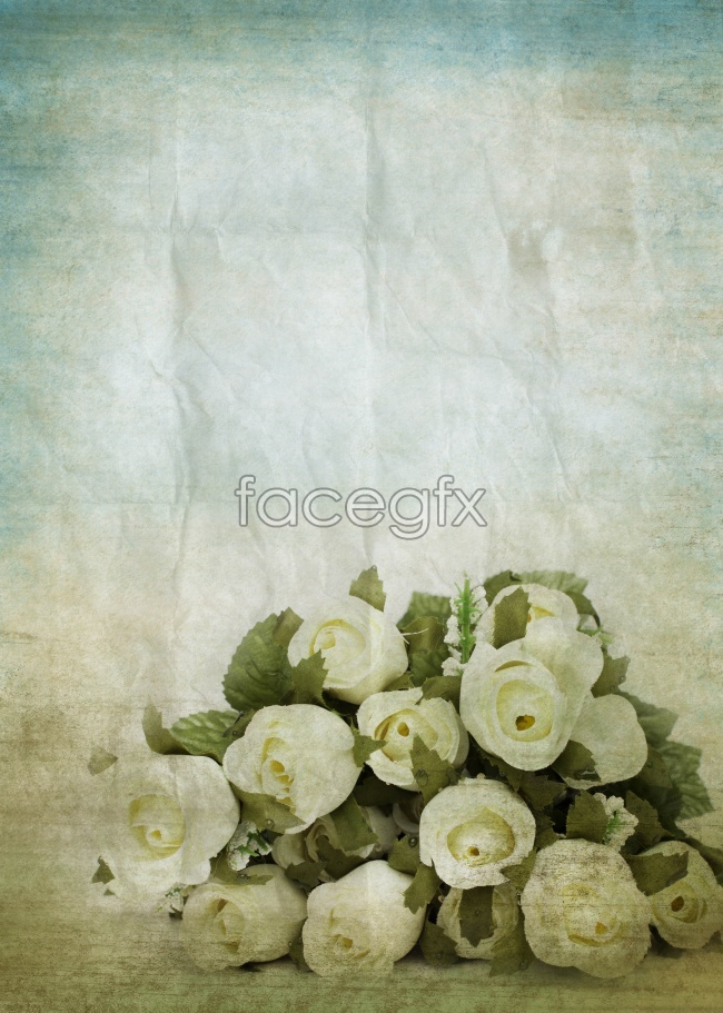 White rose flower pictures