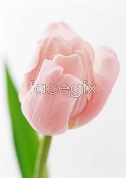 Flowers close-up 1328