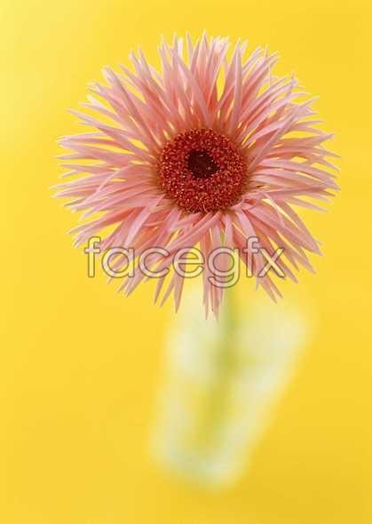 Flowers close-up 1366