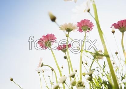 Flowers close-up 2049