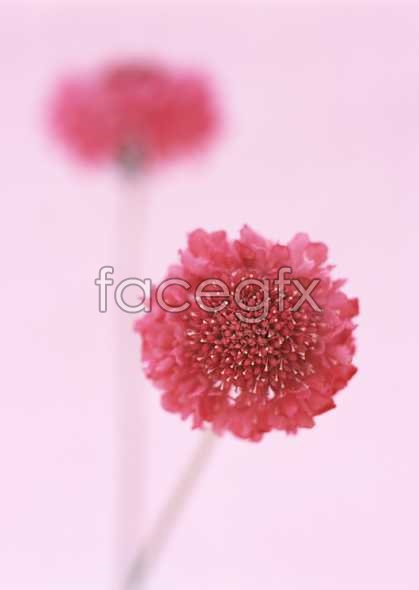 Flowers close-ups 1705