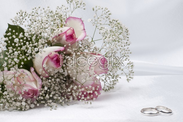 HD purple roses pictures