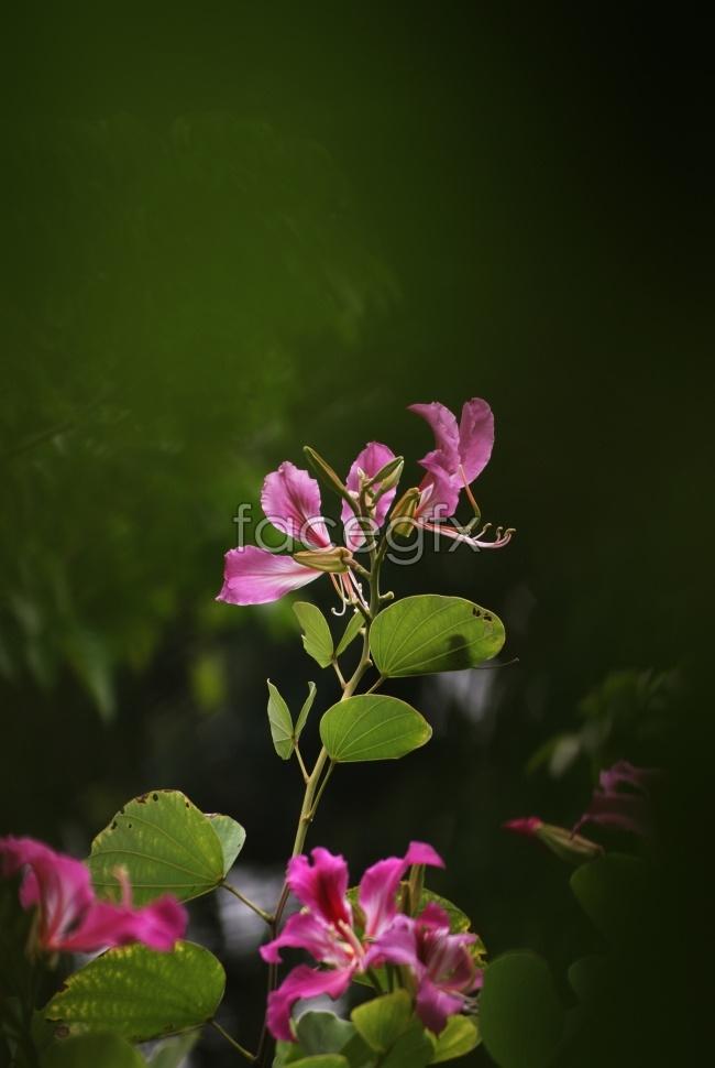 Jasmine photography high resolution images