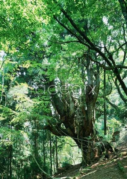 Jungle beauty of 174