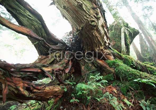 Jungle beauty of 379