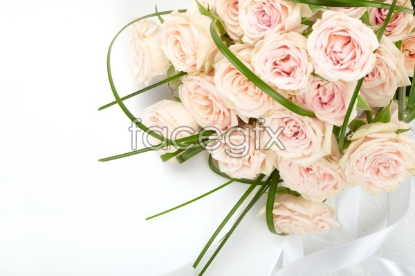 Purple roses pictures HD