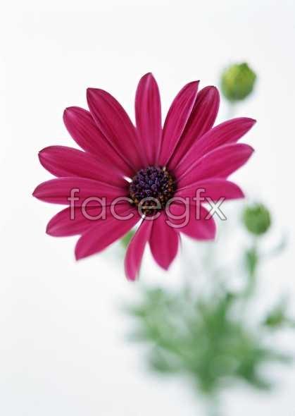 Flowers close-up 1369