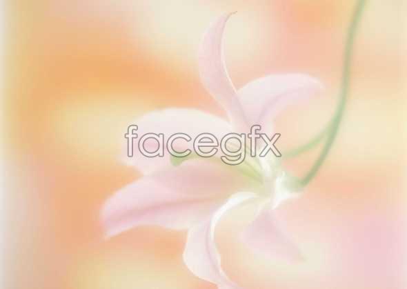 Flowers close-up 146