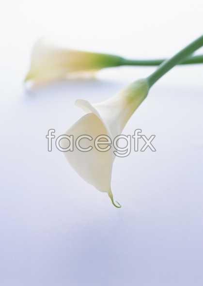 Flowers close-up 1714