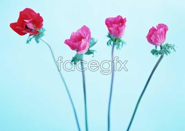 Flowers close-up 1731