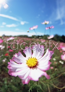 Flowers close-up 2,079
