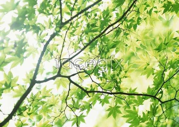 Flowers close-up 865