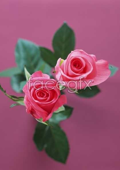 Flowers close-ups 1702