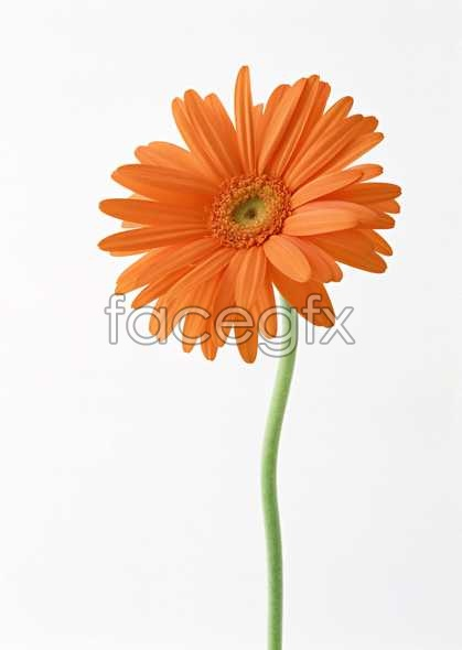 Flowers close-ups of 1363
