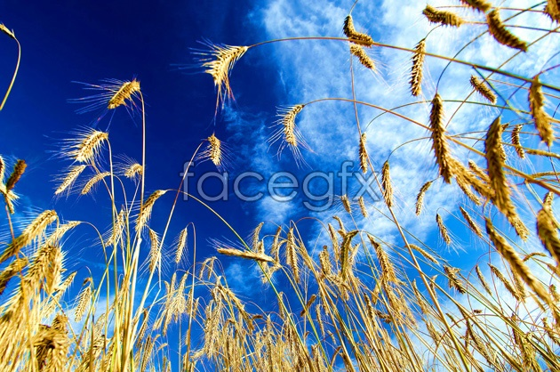 High definition pictures of dog's tail grass