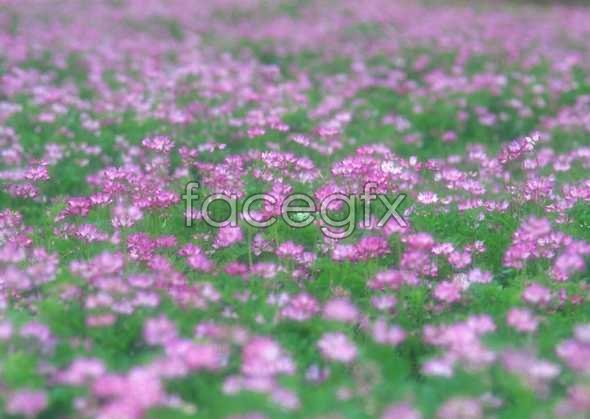 Thousands of flowers 748
