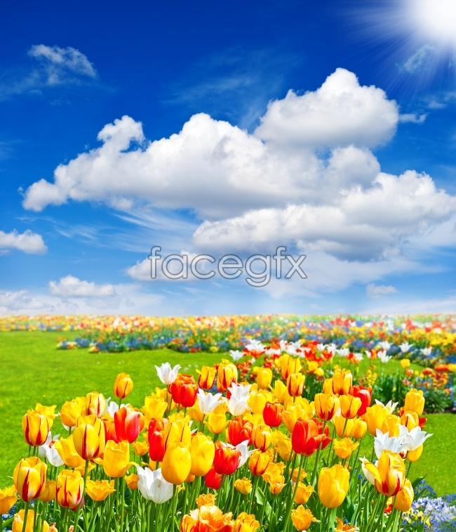 Blue Tulip landscapes HD picture