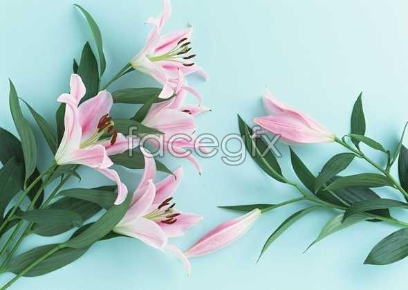 Flowers close-up 1009
