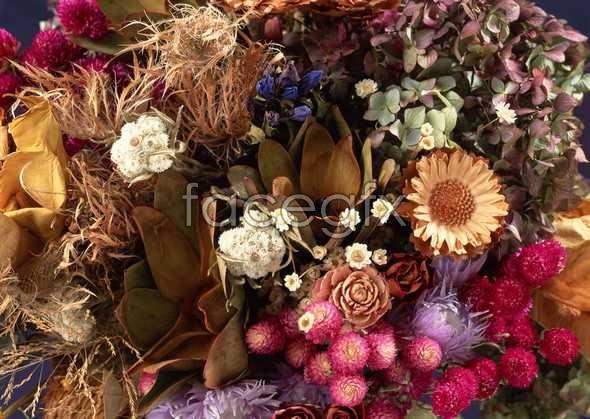 Flowers close-up 1070
