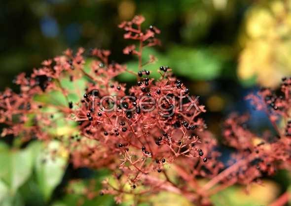 Flowers close-up 1165