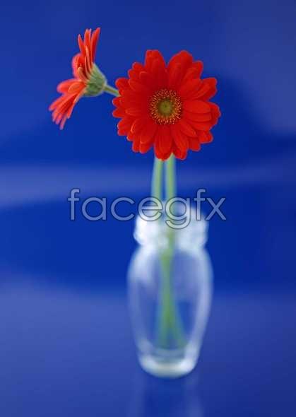 Flowers close-up 1358