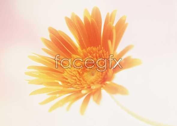 Flowers close-up 139