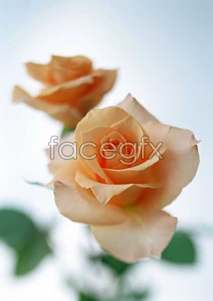 Flowers close-up 1431