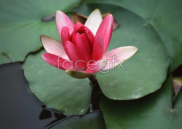 Flowers close-up 1534