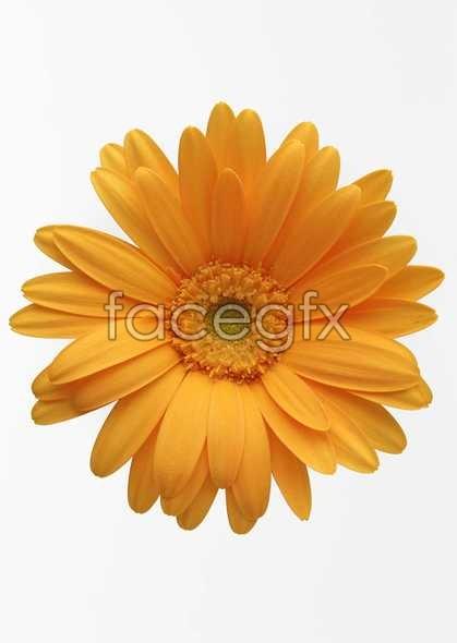 Flowers close-up 415