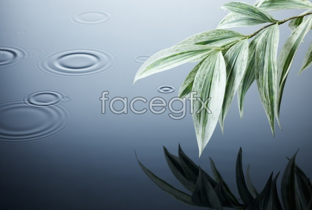 HD pictures of bamboo leaves