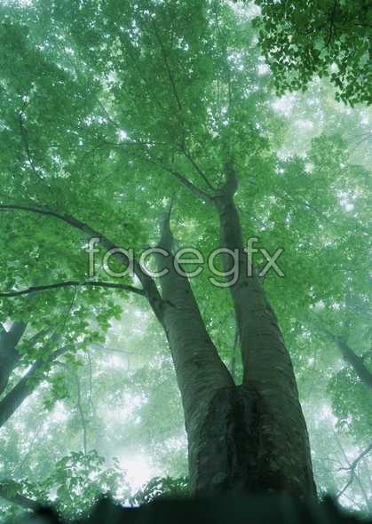 Jungle beauty of 129