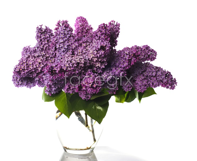 Purple flower picture material