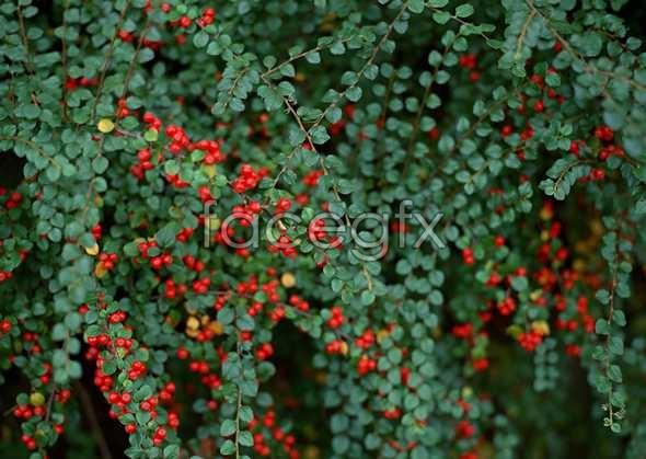 Flowers close-up 1164
