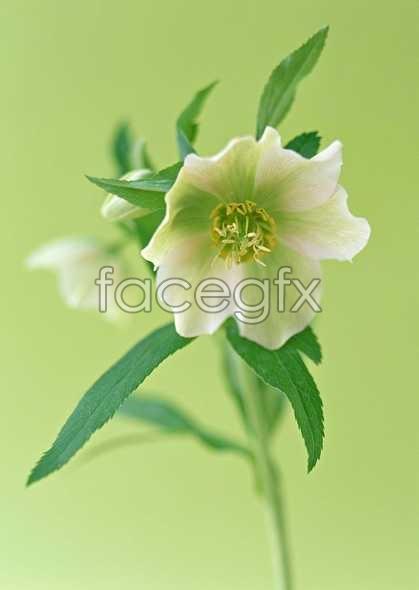 Flowers close-up 1394