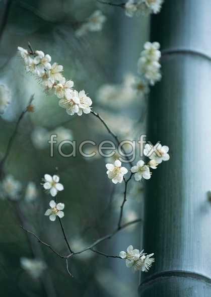 Flowers close-up 1579