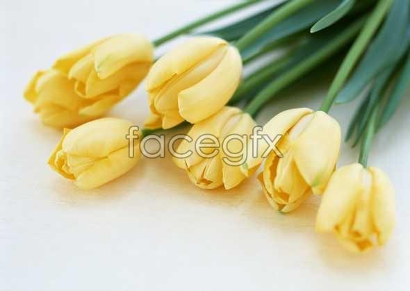 Flowers close-up 1744
