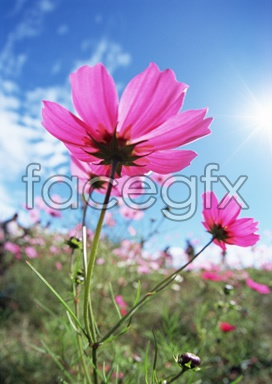 Flowers close-up 2,080
