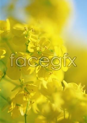 Flowers close-up 2,097