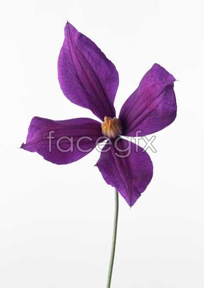 Flowers close-up 566