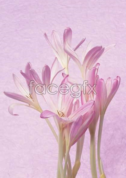 Flowers close-up 937
