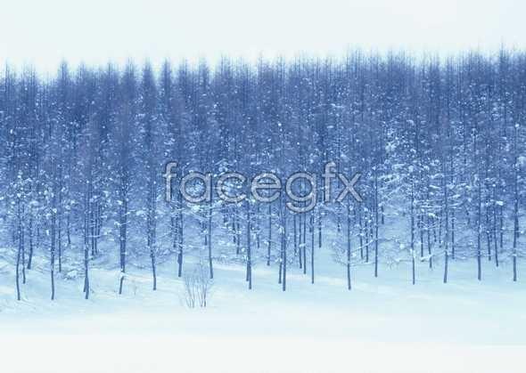 Frozen 300
