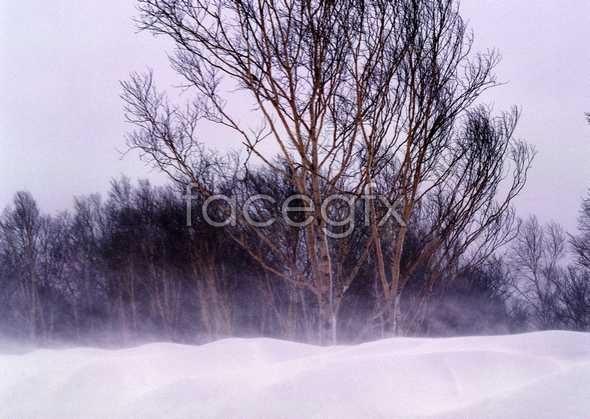 Ice 366