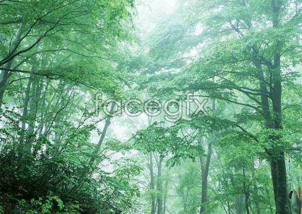 Jungle beauty of 132