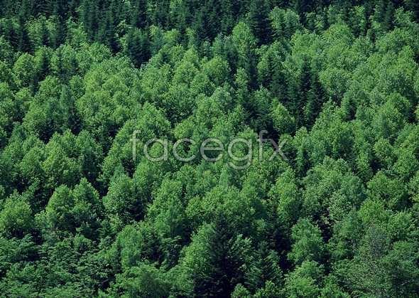 Jungle beauty of 478