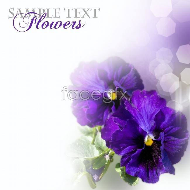 Purple flowers plants pictures