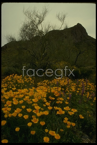 Desert landscape 60